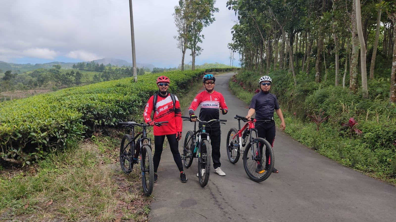 Serunya Bersepeda ke Kebun Teh Jalur Sombo ke Gucialit Lumajang