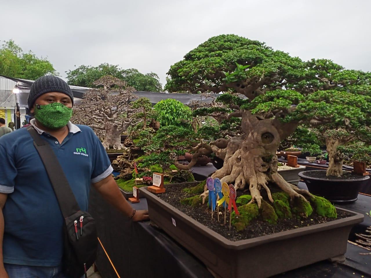 Bonsai Harianto Randuagung Dibandrol Rp. 300 Juta di Pameran Lumajang