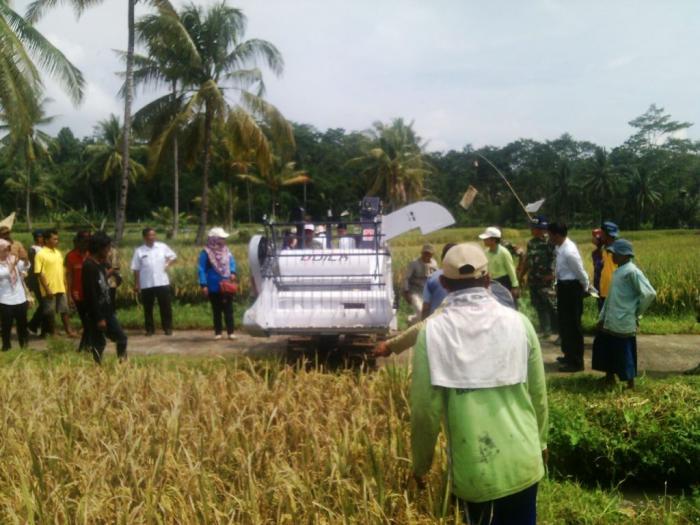 Dukung Swasembada Pangan, TNI Bersama Petani Panen Raya di Pasrujambe