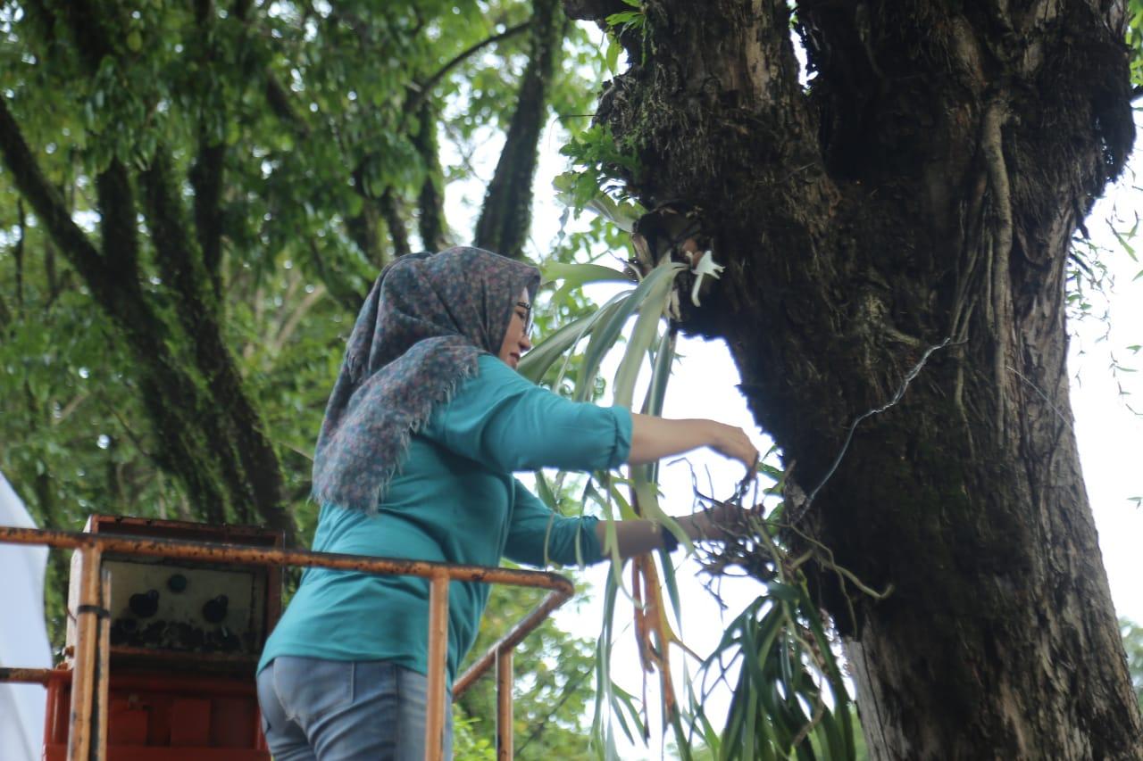 Anggrek Ekor Tupai Khas Lumajang Dibudidayakan di Pohon Pinggir Jalan