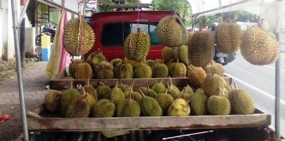 Orang Lumajang Lebih Suka Durian Murah