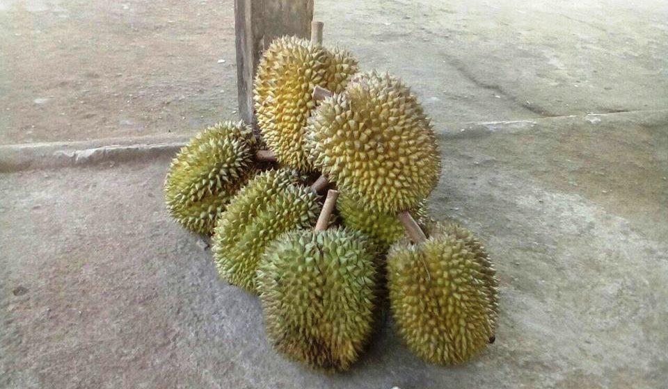 Lumajang Diserbu Durian Asal Malang