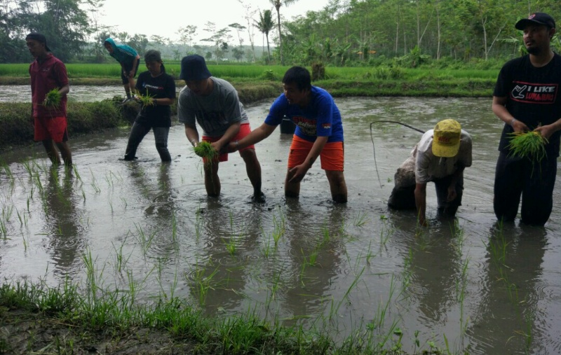 Wartawan Lumajang Belajar Tanam Padi di Wisata Edukasi Alas Semeru