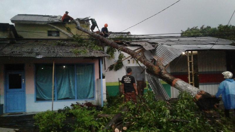 Puting Beliung Tumbangkan Pohon dan Rusak Rumah Warga Lumajang