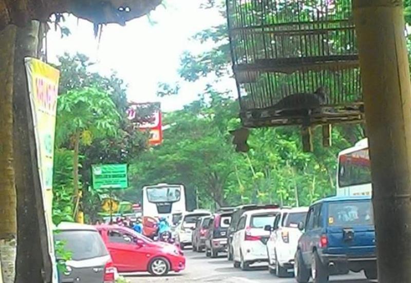 Ditabrak Honda Mobilio, Penjual Pentol Warga Dawuhan Wetan Meninggal
