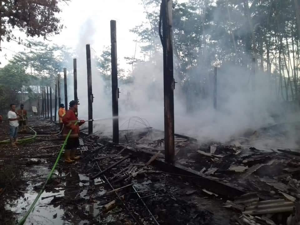Kandang Ternak di Kunir Lumajang Terbakar Sebab 23 ribu Ayam Gosong