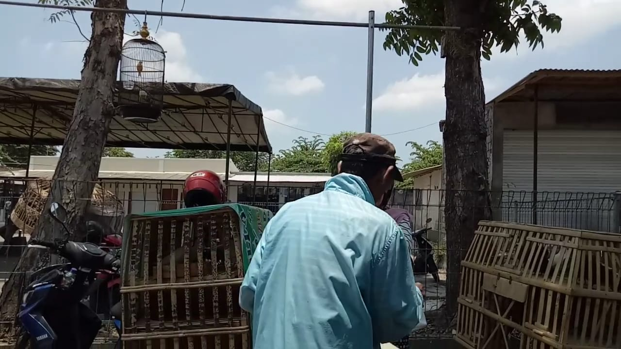 Merpati Putih Paling Diburu di Pasar Serangin Lumajang