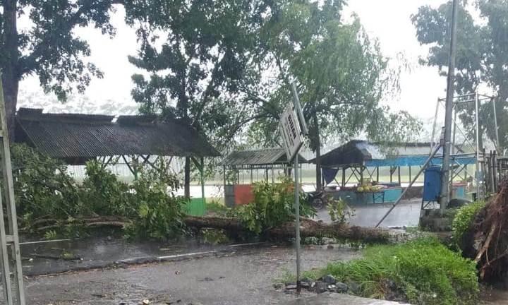 Lalin Lumajang - Jember Macet Disebabkan Pohon Tumbang