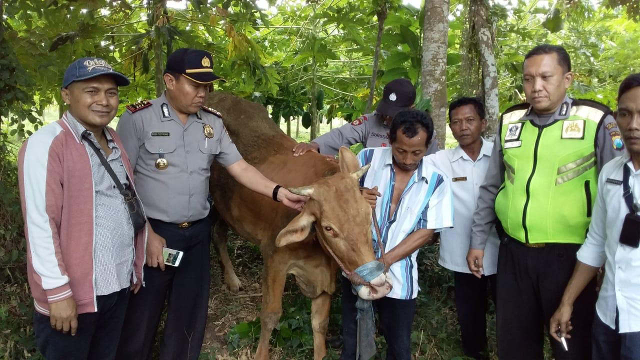 Hebat..! Satgas Keamanan Desa Jatigono dan Kunir Kidul Berhasl Gagalkan Aksi Maling Sapi