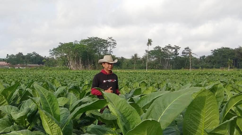 Dwi Wahyono Ingin Kembalikan Kejayaan Petani Tembakau Lumajang