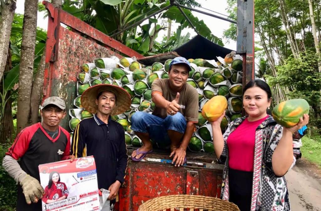 Wow..! Lumajang Juga Jadi Penghasil Pepaya Thailand Kualitas Super