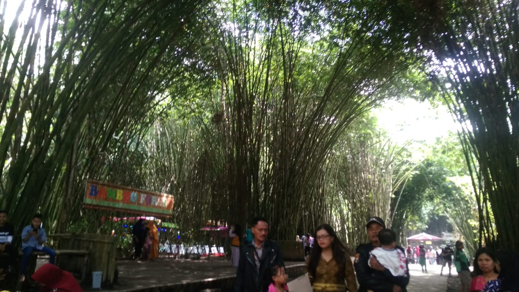 Menikmati Liburan Seru di Hutan Bambu Lumajang