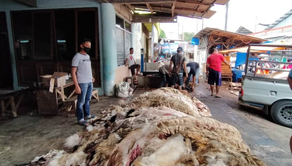 Jumlah Hewan Kurban Tak Turun Drastis di Masa Pandemi Covid 19