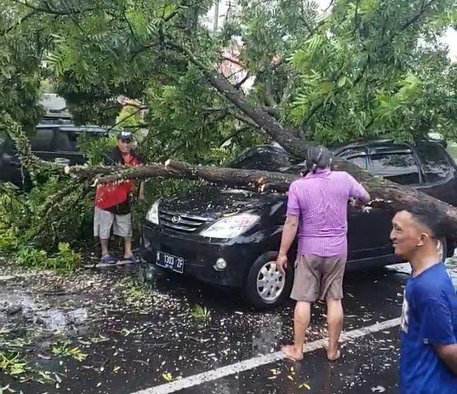 Mobil Xenia Penyok Tertimpa Pohon Tua di Lumajang saat Hujan Deras