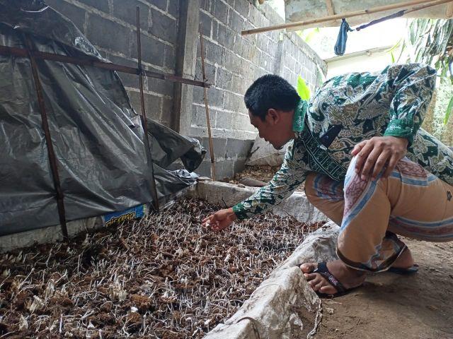 Cara Membuat Jamur Janggel Jagung Karanganom Lumajang