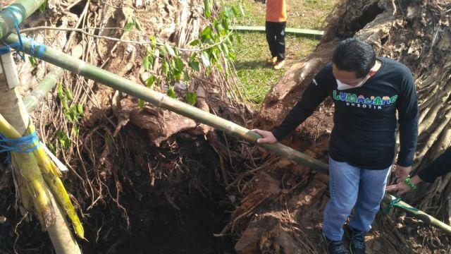 Cak Thoriq dan Bundah Indah Tanam Pohon Beringin Lumajang Baru