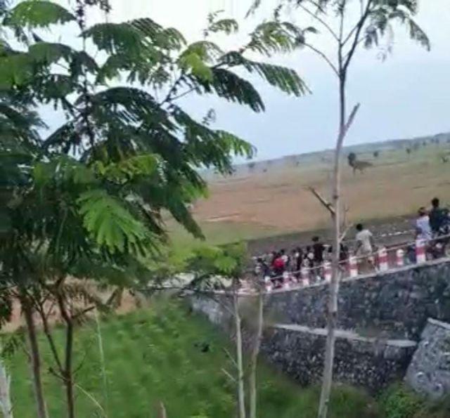Video Viral Tawuran di  Barat Jembatan Selowangi JLS  Lumajang Beredar