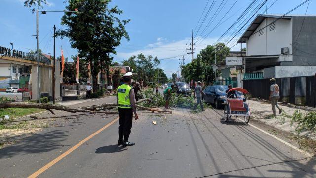 Satlantas Polres Lumajang Beri Pengamanan Pemotongan Pohon di Jalan