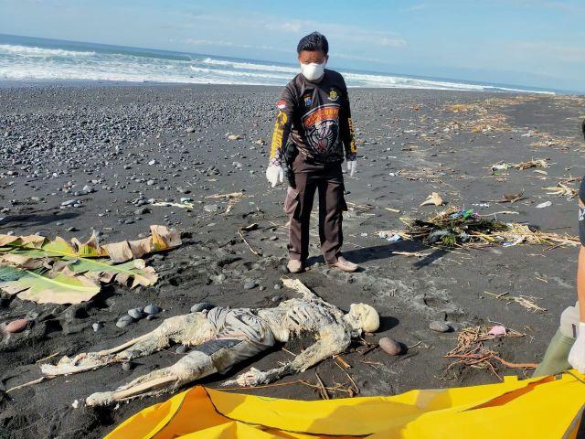 Mayat Tengkorak Busuk Ditemukan di Pesisir Pantai Watu Pecak Lumajang