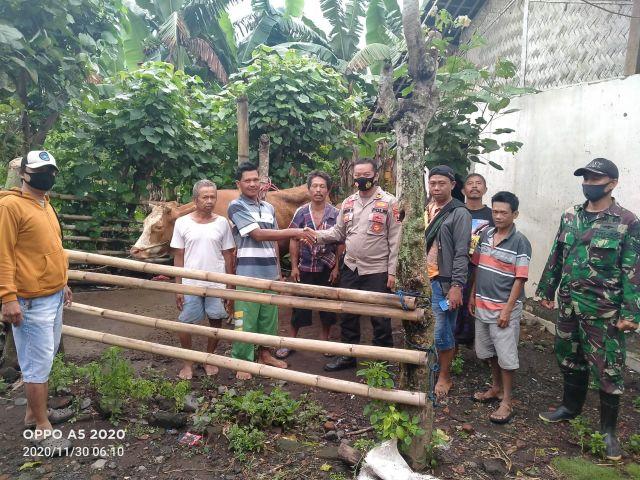 Warga Desa Kalibendo dan Polsek Pasirian Gagalkan Pencurian Sapi
