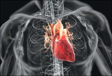 Inilah Makanan Tak Baik untuk Kesehatan Jantung