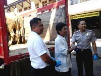 Curi Empat Ekor Sapi di Randuagung, Maling Asal Sumberbaru Jember Ditembak Polisi