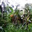 Ratusan Monyet Serbu Ladang dan Permukiman Warga Desa Grobogan