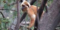 Polisi Tetapkan Dua Tersangka Pemburu Monyet dan Lutung Gunung Semeru