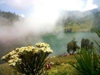 Ke Ranu Kumbolo, Pimred Lumajangsatu.com Disambut Bunga Keabadian (Edelwies)