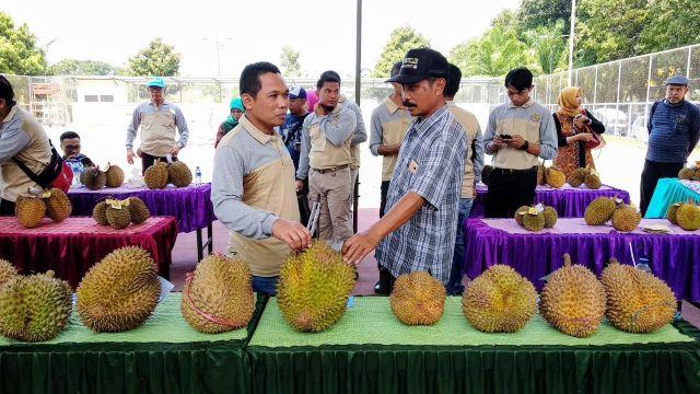 Cak Thoriq Terpesona Kenikmatan Durian Kembang Lumajang