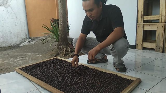 Gemapalu Lumajang Buru Citra Rasa Kopi Semeru