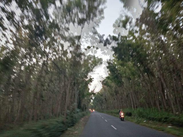 Cerita Mistis  Hantu Perempuan Jalan Hutan Jati Senduro