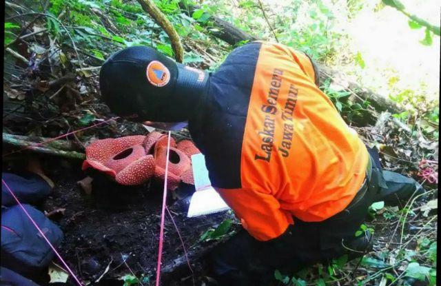 Wow..! Laskar Semeru Temukan 18 Bunga Rafflesia Arnoldi di Hutan Tempursari
