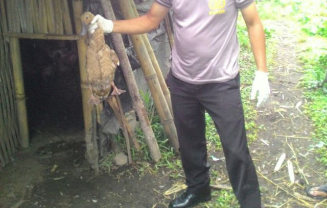 Warga Tangkap Maling Bebek di Desa Keloposawit