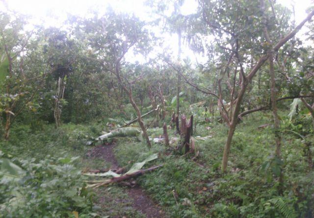 Teror Pelestarian Lingkungan, Posko Laskar Hijau di Gunung Lemongan Dirusak
