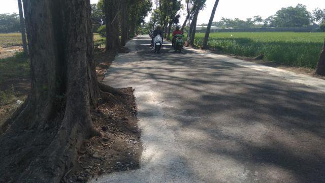 Pelebaran Jalan Antar Kecamatan di Desa Boreng Ramah Pohon Kakija