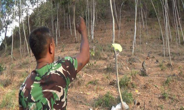 Kawanan Kera Liar Gunung Tambo Pasirian Turun ke Permukiman Warga