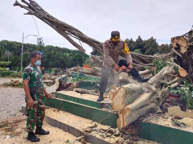 Kapolres Lumajang Ikut Evakuasi Pohon Beringin Alun-alun