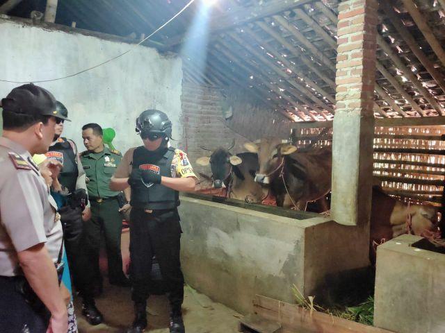 Duh..! Satgas Keamanan Desa Gak Onok, Maling Sapi Beraksi di Sumberwringin