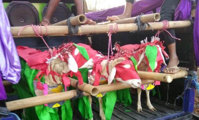 Asal Mula Tradisi Ngarak JOLEN Desa Tanggung Lumajang