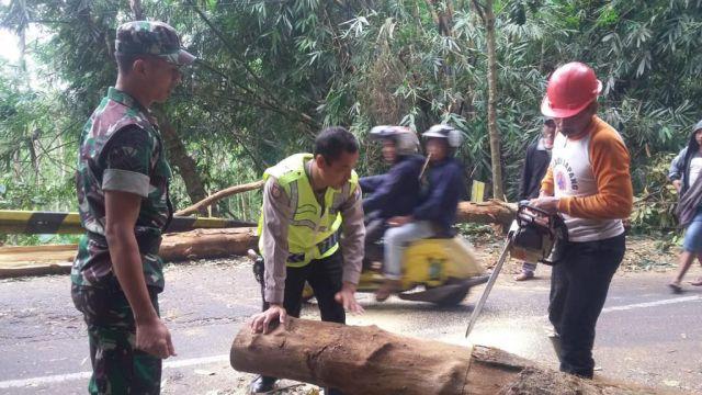 Aparat Bersama Warga evakuasi Pohon Tumbang di Jalur Piket Nol