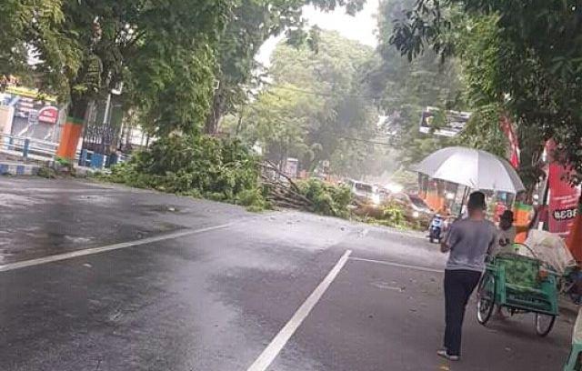 Hujan Disertai Angin Sebabkan Pohon Tumbang di Utara RS Haryoto