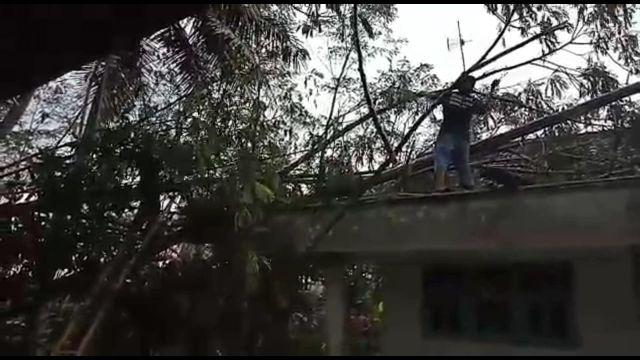 Puting Beliung Sebabkan Dua Rumah di Wonorejo Tertimpa Pohon Tumbang