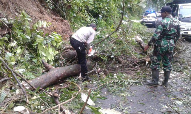 Polisi bersama Tentara Ikut Evakuasi Pohon Tumbang di Piket Nol