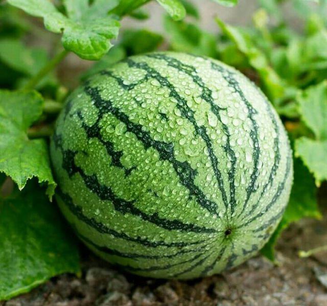 8 Cara Mudah Memilih Semangka yang Matang dan Manis