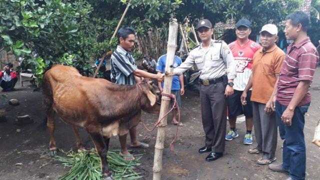 Sapi Warga Condro Dicuri Maling Ditemukan di Bago Pasirian