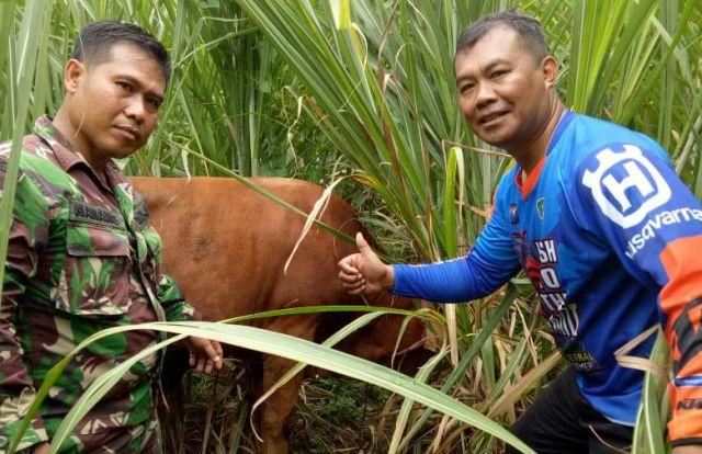 Anjing Pelacak Belum Tiba, Sapi Warga Kalibendo Ditemukan di Kebun Tebu Bago