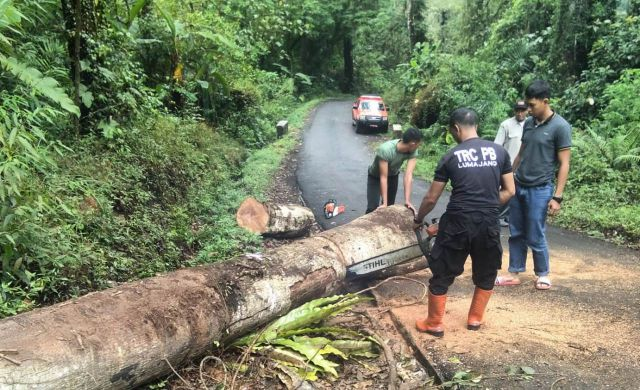Hujan Deras Membuat Pohon Tumbang ke Jalur Ranu Pane