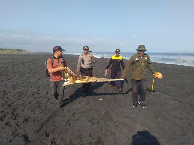 Kapolsek Pasirian Pantau Tim BKSDA Ambil Sampel Tulang Bangkai Ikan Paus