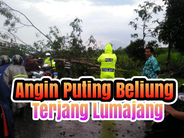 Video : Angin Puting Beliung Terjang Lumajang
